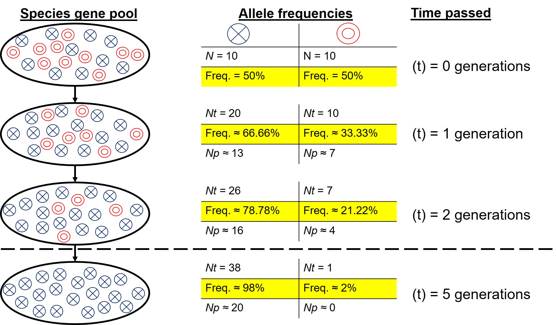 Allele frequency over time diagram