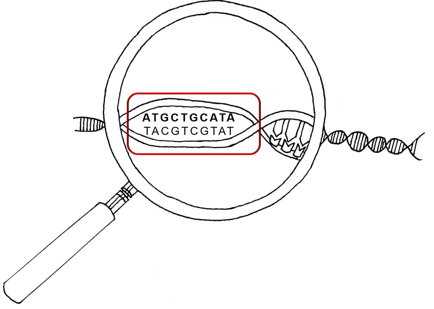 Magnifying glass figure