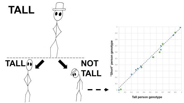 Polygenic height figure final