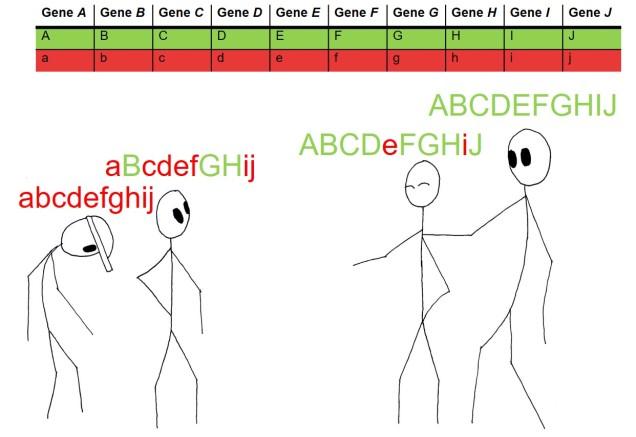 Height QTL