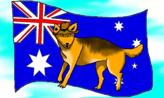 Patriotic dingo
