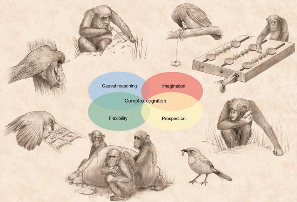 Convergent evol intelligence