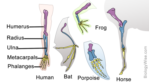 Homology figure