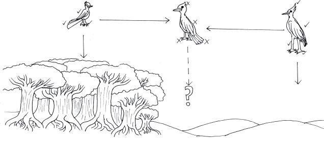 Hybrid birds