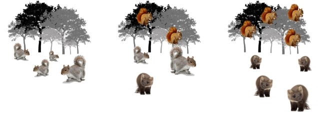 Martens and squirrels figure.jpg