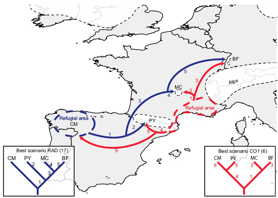glacial refugia example figure.jpg