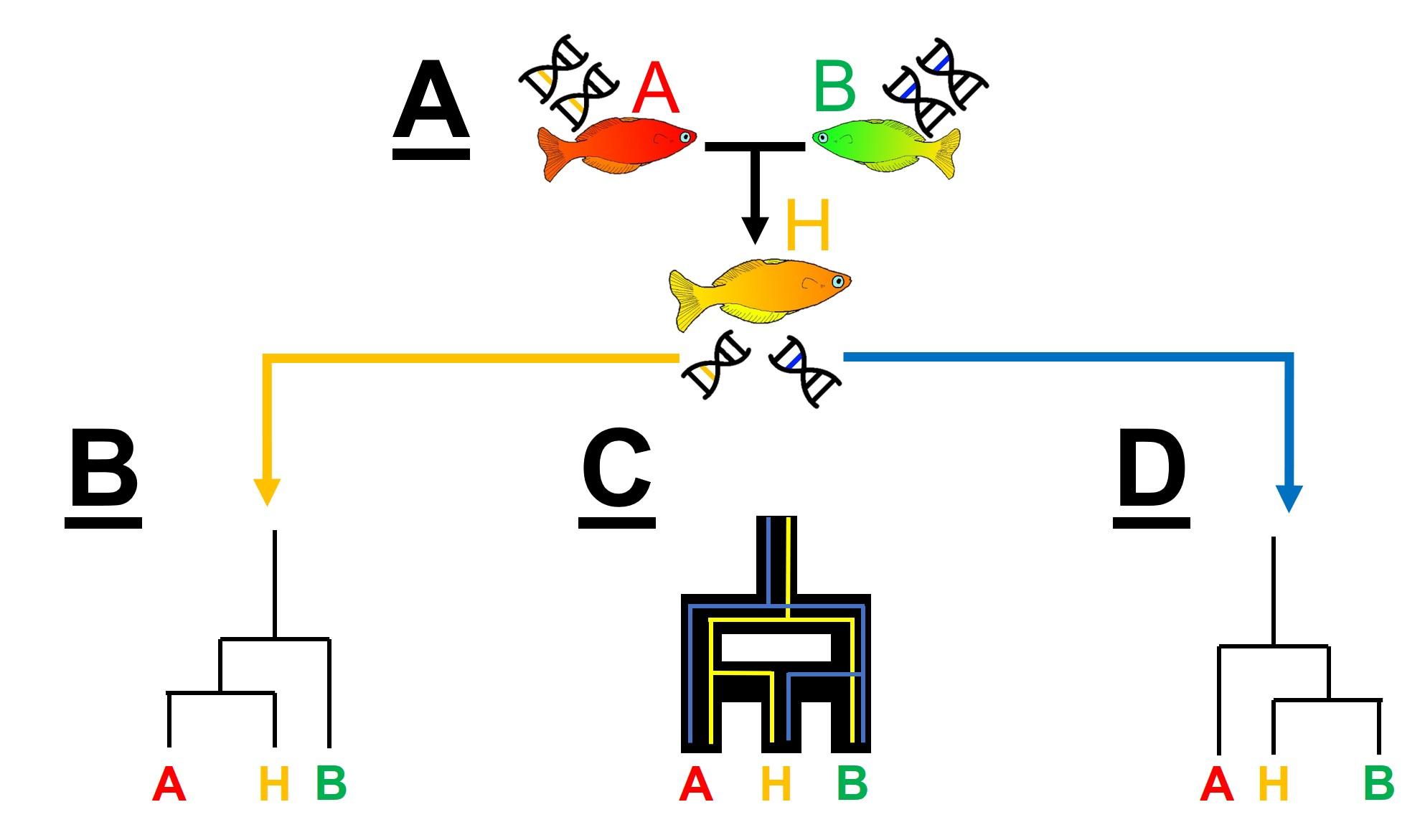Hybridisation_figure