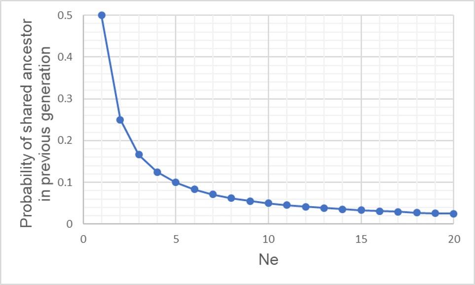Constant Ne and coalescent prob