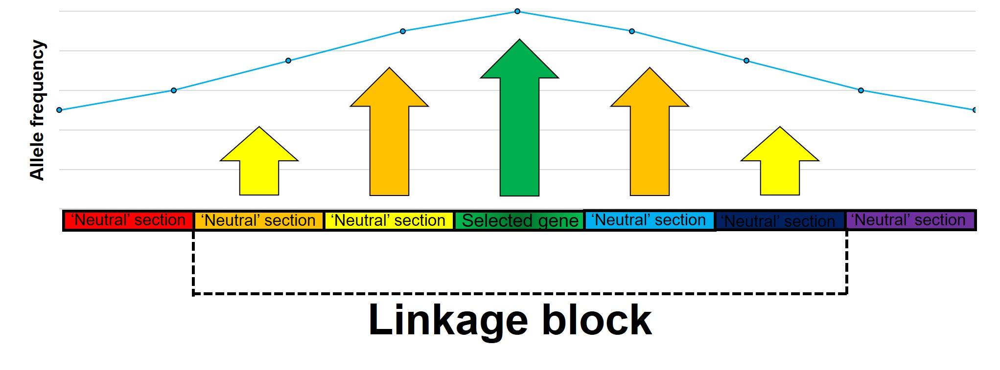 Linkage disequilibrium figure