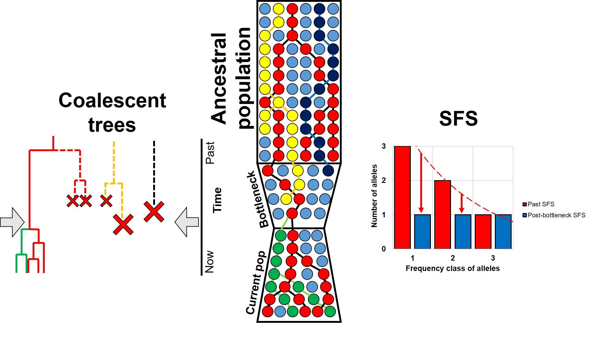 SFS shift from bottleneck example.jpg