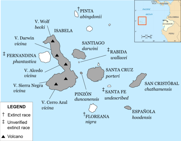 Galapagos island and tortoises