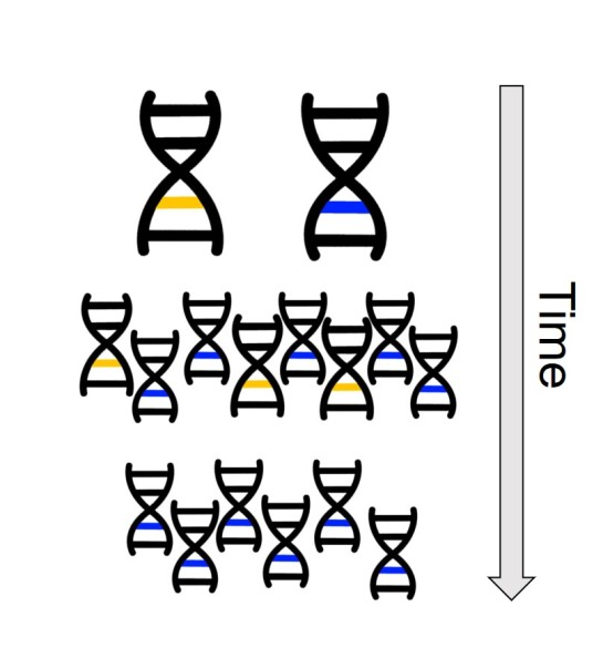 Adaptation from genetic variation.jpg