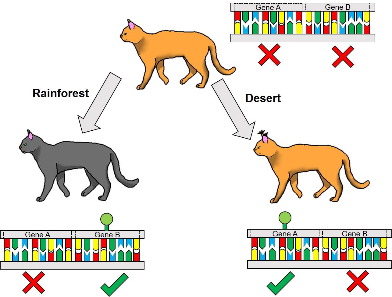 Epigenetic cats example
