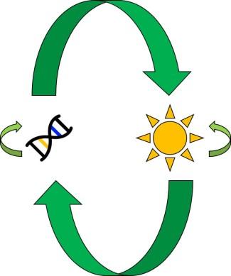 Genetics and environment interactions figure.jpg