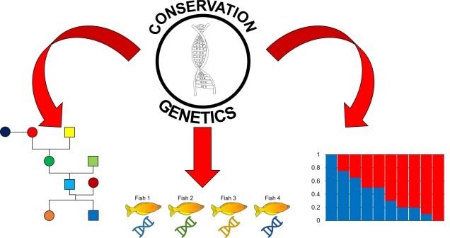 Applications of conservation genetics.jpg