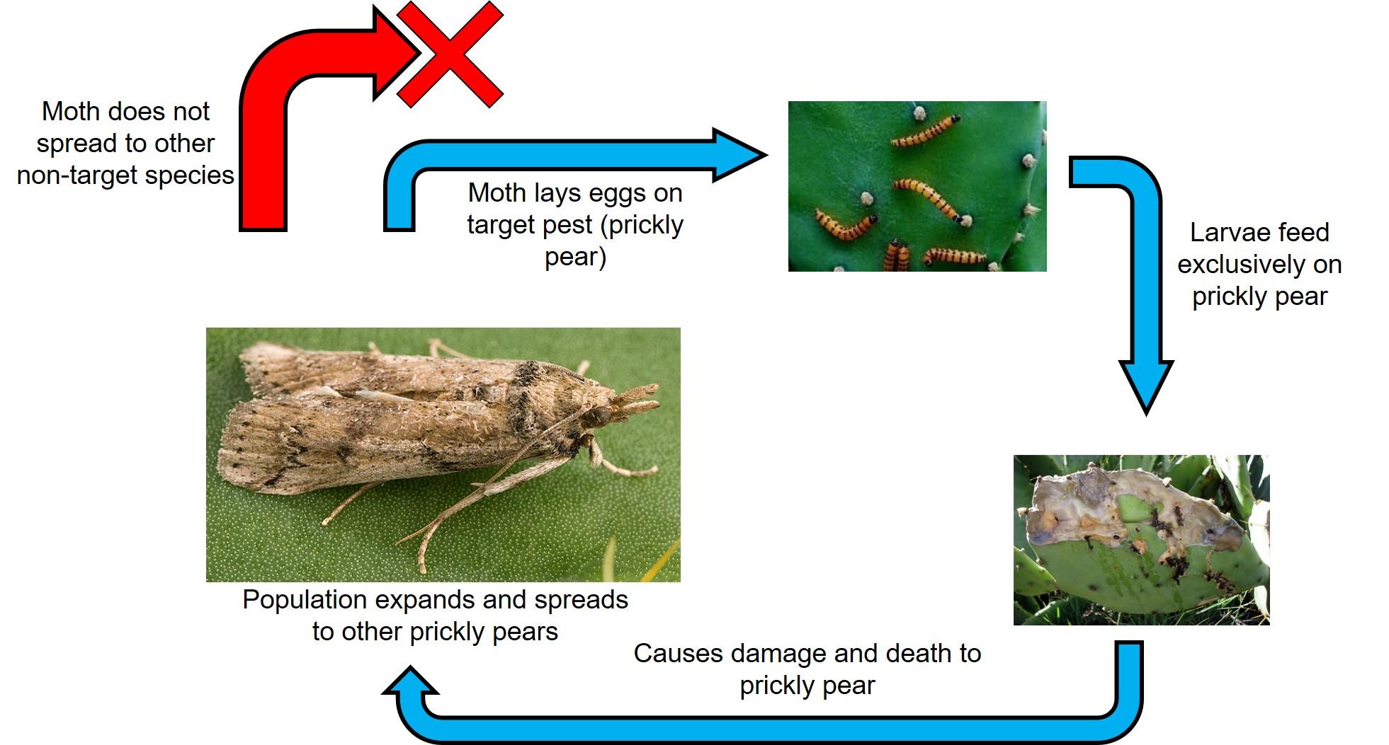 Moth biological control flow chart