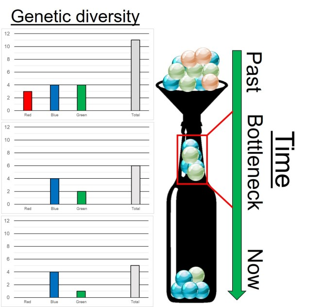 Genetic bottleneck figure
