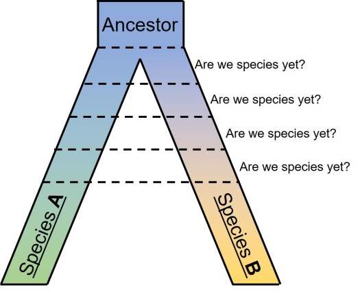 Speciation continuum figure.jpg