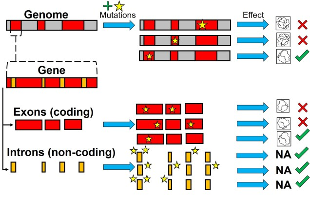 Variation across genome.jpg