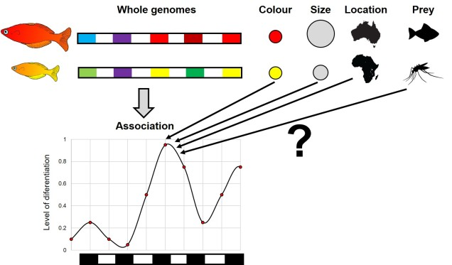 Confounding phenotypes example figure.jpg