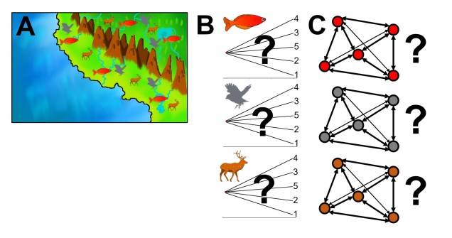 Basic comparative phylogeography figure