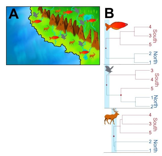 Discordant phylogeography figure